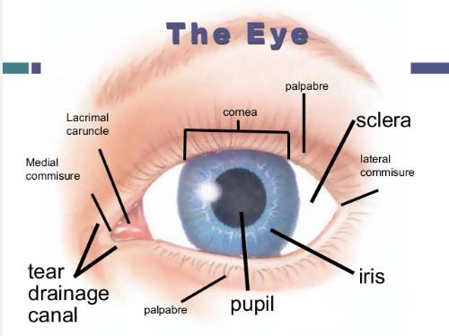Từ vựng liên quan đến mắt